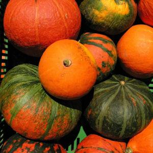 automne-que-manger-Potimarron-Myyaam