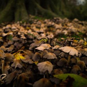 automne-que-manger-champignons-myyaam