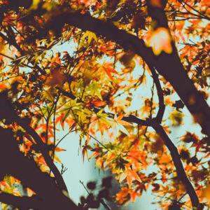automne-que-manger-myyaam