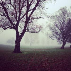automne-que-manger-myyaam-nature