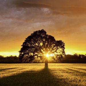 naturopathie-myyaam-arbre-nature