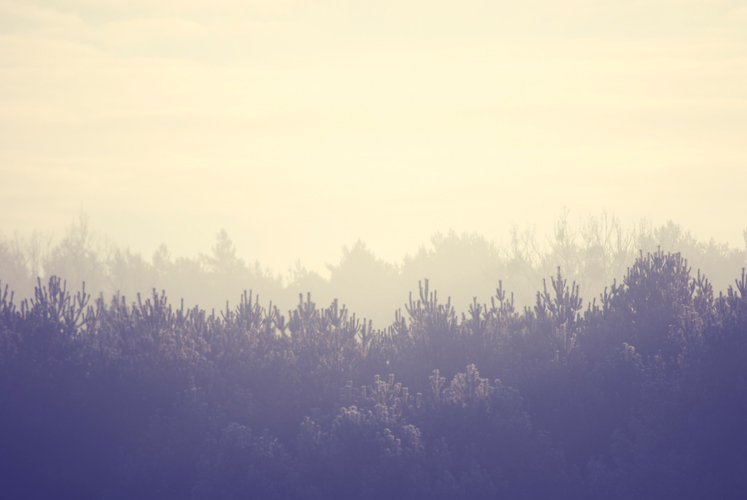 paysage-hiver-nature-serenite-bien-etre