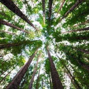 arbres-foret-carre